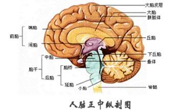 成都棕南精神疾病研究院精神科